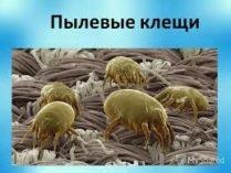 КЛЕЩ ДОМАШНЕЙ ПЫЛИ